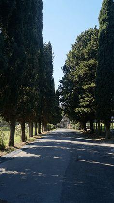 Ein Spaziergang entlang der Via Appia ist ein toller Ausgleich zum Trubel in der Stadt.