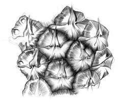 Pineapple Rum by Maya Pixelskaya, via Behance Pineapple Sketch, Pineapple Drawing, Pineapple Art, Gcse Art Sketchbook, Sketching, Decay Art, Natural Form Art, Art Alevel, Stippling Art