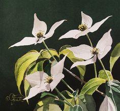 JACQUELINE GNOTT Watercolor