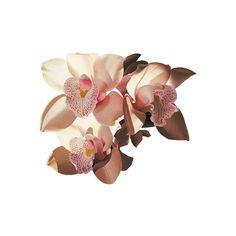 entrez dans mon antre fantastique - tubes fleurs |... ❤ liked on Polyvore featuring home, home decor, floral decor, flowers, fillers, plants, backgrounds, nature, flower stem and flower home decor