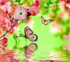 80 best wallpapers images beautiful birds animal pictures rh pinterest com