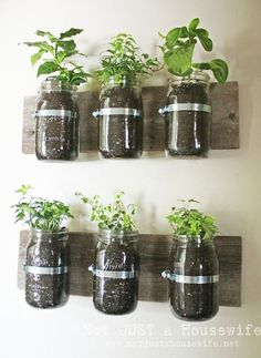 What a great way to grow herbs by martina