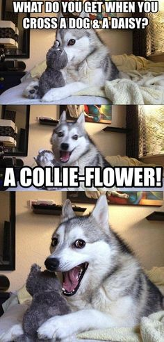 this dog meme is my new favorite