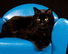 497 best catster images cat cat gif pet health rh pinterest com cat sitting in a chair