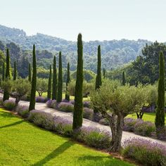 Olive trees, lavender, and Provençal cypress line the entrance drive of beauty guru Frédéric Fekkai's gorgeous vacation home in the South of France, which features landscape design by Marco Battaggia. Photo by Simon P. Modern Landscaping, Backyard Landscaping, Landscaping Ideas, Modern Backyard, Large Backyard, Landscape Architecture, Landscape Design, Italian Cypress Trees, Italian Garden