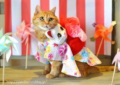 cat yukata