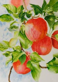 Watercolor painting demonstration of red apples step  4.  In an outdoor scene with bright sun, I like a background with some blue in it. That's not right or wrong, I just like it.   The vivid red will be toned down a lot, but will lend a glow to the apples in the finished painting.