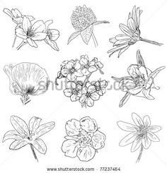 how to draw different kinds of flowers