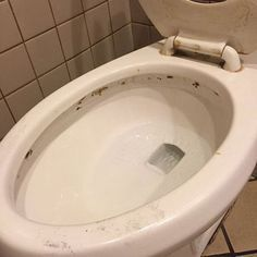When you encounter black mold in your toilet, you have to know how to clean it. Mold can be in your bowl, tank or seat! Learn how to remove it! Cleaning Mold, Toilet Cleaning, Diy Cleaning Products, Cleaning Hacks, Bathroom Cleaning, Cleaning Solutions, Cleaning Supplies, Clean Black Mold, Remove Black Mold