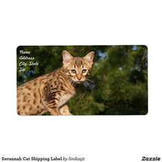 Savannah Cat Shipping Label