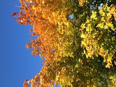Love an autumn tree and a sunny day!