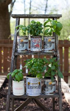 Recycled herb planters and an upcycled wooden ladder garden display herbs in recycled tin cans and an old ladder display Recycled Tin Cans, Recycled Garden, Recycled Planters, Diy Upcycled Garden Ideas, Tin Can Garden Ideas, Recycling Ideas, Wooden Garden, Garden Boxes, Repurposed