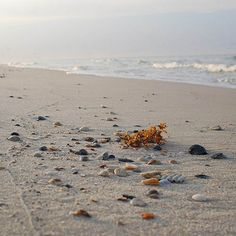 Seashells on Fort Morgan Beach in Gulf Shores, Alabama. Fort Morgan Beach, Fort Morgan Alabama, Best Vacations, Vacation Destinations, Vacation Ideas, Travel Sweepstakes, Gulf Coast Beaches, Gulf Shores Vacation, Orange Beach Alabama