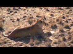 Video: The Wild Animal Sanctuary in Keenesburg, Colorado   traveLink