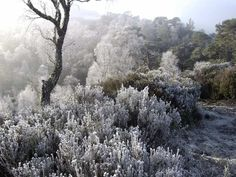 From Hoar Frost & Winter Gardens, an article by Rochelle Greayer which is making me rethink my gardens for more winter interest.