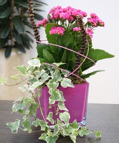 Arrangement 'Pink Sensation'  This cute do-it-yourself indoor plant arrangement will add atmosphere to your home! Easy to do yourself or with the help of the children! The 'Pink Sensation' arrangement consists of easy to grow plants that remain beautiful for a long time and demand very little care. Just water them when they are thirsty, i.e. when the potting compost feels slightly dry. These houseplants and accompanying accessories of this do-it-yourself arrangement are supplied separately.