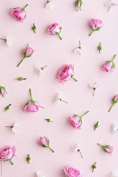 Rosebud and blossom background by Ruth Black - Blossom, Rose - Stocksy United Ps Wallpaper, Flower Phone Wallpaper, Screen Wallpaper, Pattern Wallpaper, Wallpaper Backgrounds, Makeup Wallpapers, Cute Wallpapers, Flower Backgrounds, Photo Backgrounds