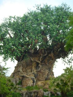 Animal Kingdom, Disney FL