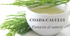 Coada-Calului: Efecte INCREDIBILE descoperite de cercetatori Flora, Mugs, Healthy, Tableware, Medicine, Plant, Dinnerware, Tumblers, Tablewares
