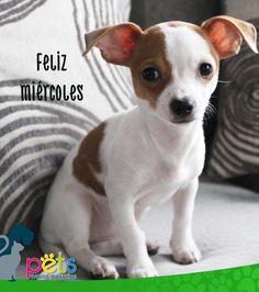 Feliz miércoles 👍🏽  #PetsWorldMagazine #RevistaDeMascotas #Panama #Mascotas #MascotasPanama #MascotasPty #PetsMagazine #MascotasAdorables #Perros #PerrosPty #PerrosPanama #Pets #PetsLovers #Dogs #DogLovers #DogOfTheDay #PicOfTheDay #Cute #SuperTiernos