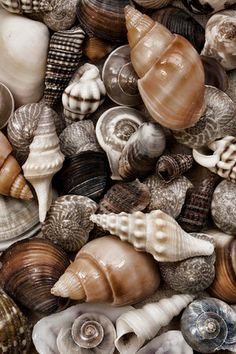 My favorite thing to do at the beach is look for shells. Last time we went to the beach , my back got the most tan from bending over looking for shells the whole day.