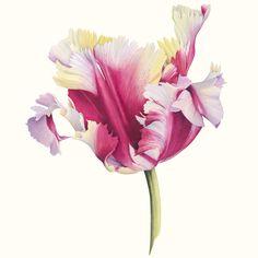 Cheryl Wilbraham – The Society of Botanical Artists