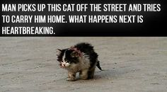 This abandoned little kitten was found wandering the streets, and every time people saw him they'd shy away from him because he looked ugly and sick. His name? Ugly the cat. One man took pity on the poor thing and shared his love with Ugly, before he died in his arms.