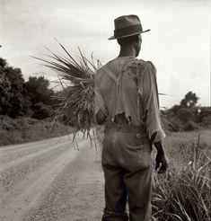 """July 1936. """"near Vicksburg, Mississippi."""" by Dorothea Lange."""