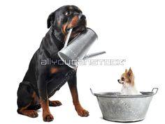 Artist: © cynoclub Dogs, Artist, Animals, Animales, Animaux, Pet Dogs, Artists, Doggies, Animal