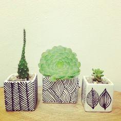 Cactil Cactus Land  Colección Black & White
