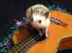 Steven O. Sellers.Napkin, the Ukulele Hedgehog, and she has her own song (see…