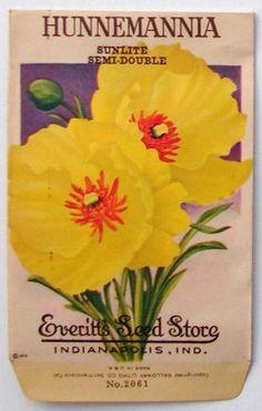 EVERITT'S SEED STORE,  Hunnemannia 2061, Vintage Seed Packet