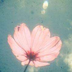 Nature Photography Flower Art Shabby Chic Decor door CassiaBeck