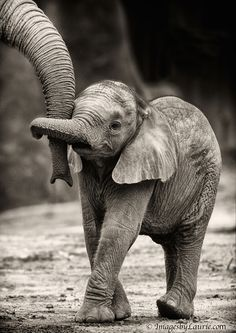 Baby Elephant Holding Trunks - http://bit.ly/1z4RT6X