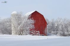 Snow covered barn and trees in Montcalm County Michigan