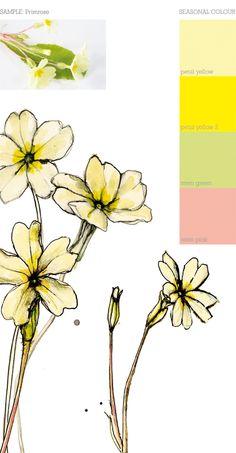 spring flowers primrose primula cyclamen botanical illustration vintage botanical flower. Black Bedroom Furniture Sets. Home Design Ideas
