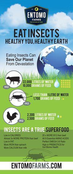 #cricketflour #cricketpowder #insectprotein #entomophagy #sustainable…
