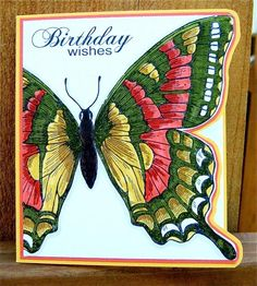 Bright Swallowtail Cutaway