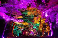 teamlab brilliantly illuminates an ancient shrine in kyoto and its surrounding primeval forest