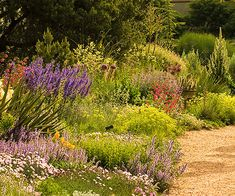 Be sure to include a few plants with vertical growth to add interest to the landscape. In the section of the garden shown here, upright salvias, penstemons, and verbascum, along with spiky yucca foliage, contrast beautifully with the myriad of mounding plants./
