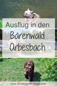 Bärenwald in Arbesbach Labrador Retriever, Adventure, Teenager, Travel Tips, Nature, Nature Activities, Outdoor Adventures, Vacation Travel, Travel Report