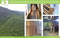 Tour Our #Bamboo Business(plant): From Crop to Finish #ecofriendly