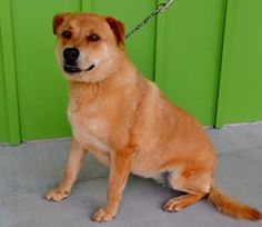 Jasmine has been adopted!