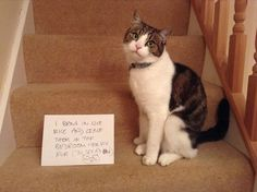 """""""I bring in live mice and leave them in the bedroom for my mum (to tread on)!"""""""