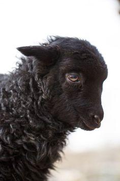 Daily Dose is original work from award winning animal photographer Barbara O'Brien