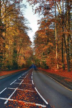 Autumn Road - Marvelous Nature