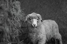 Welcome to Wool Week | Watch this space as we celebrate all things wool from talks with our award winning Bowmont farmer Lesley Prior to tales of wool from near and afar plus select giveaways.