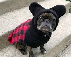 BatHat Popover Coat - pops on fast - fully adjustable - bat ear hood - Perfect for Frenchies, Boston Terriers, Pugs, & big-chested dogs!