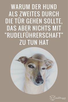 Hund   Erziehung   Tür   Rudelführer