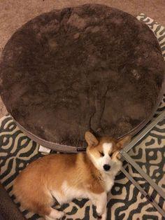 """""""I'm glad we got him a new bed"""""""